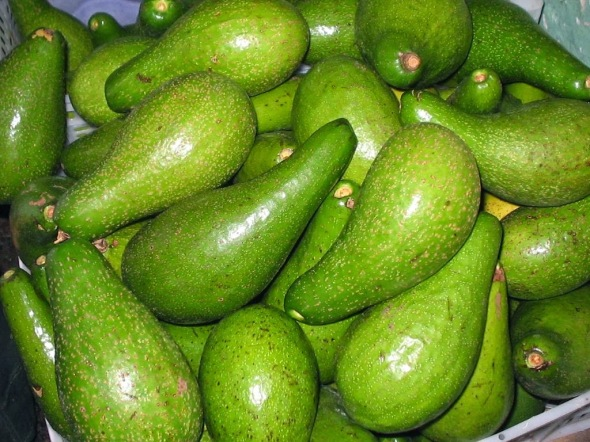 aguacate11