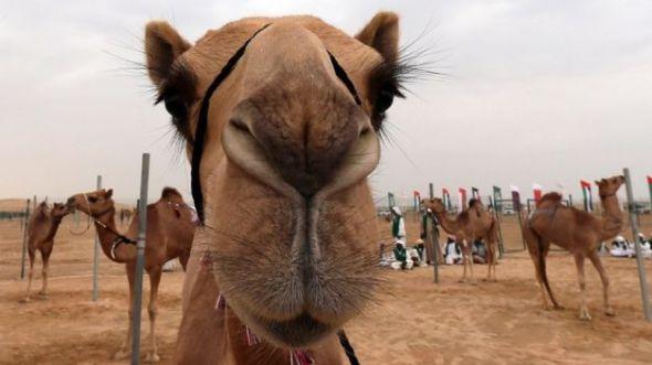 Abu-Dhabi-tradicional-concursos-artesania_TINIMA20140203_0181_5